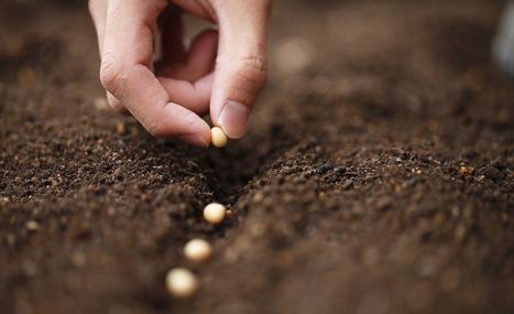 Échangeons graines et savoir-faire pour préserver la biodiversité ! | Attitude BIO | Scoop.it