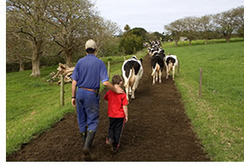 From Farm to Plate - Dairy Australia | HSIE Stage 1:Explains how people and technologies in systems link to provide goods and services to satisfy needs and wants | Scoop.it