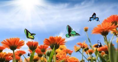 Butterfly Park to soon spruce up Dubai's Miracle Garden - Zawya   Local Flower Shop Online   Scoop.it