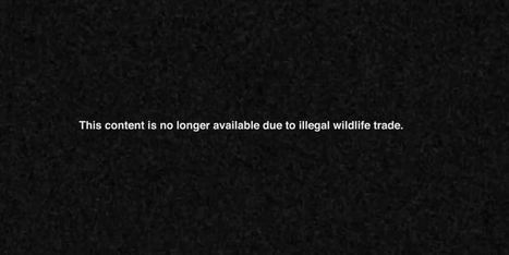 WWF Extinct - using youtube searches to alert people. (2015) case film | adland.tv | Digital Love | Scoop.it