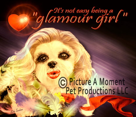 Hollywood Makeovers for Dogs | The Canine Community Reporters  News | Scoop.it