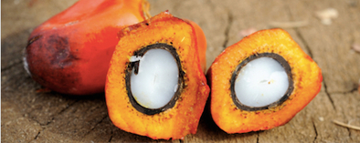 Ethical Performance | News article: New call for sustainable sourcing of palm oil | Responsible Sourcing | Scoop.it