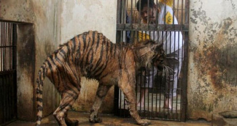 World Of Mysteries: Animal Hell Called Surabaya Zoo (10 pics) | animal cruelty in zoos | Scoop.it