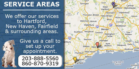 About Us | Carpet Cleaning Hartford | Scoop.it
