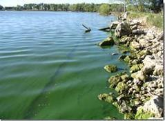 Climate Change and Harmful Algal Blooms | Algal Bloom Monitoring | Scoop.it