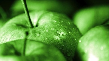 I Use Granny Smith Apples For Juicing | Juicing For Health | Scoop.it