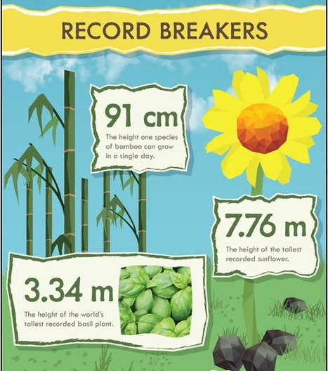 50 Insane Facts About Plants - Infographic | Maths and Science page | Scoop.it