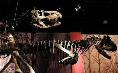 Non, les dinosaures ne pratiquaient pas que la levrette | put.it put.it mix.it shake.it | Scoop.it