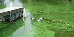 Harmful Algal Blooms | Everything You Need To Know | Organic Farming | Scoop.it