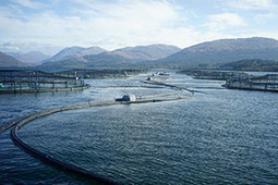 MSc in Aquatic Production and Veterinary Health:City University of Hong Kong | ASEM Aquaculture Health | Scoop.it