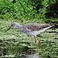 Wiki Aves - A Enciclopédia das Aves do Brasil | gaia | Scoop.it