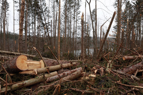 City Hopes Money Grows From Fallen Trees | The Blog's Revue by OlivierSC | Scoop.it