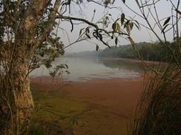 Dudhwa National Park | Ranthambore Jeep Safari | Scoop.it