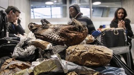 Trafic scandaleux d'animaux protégés | Biodiversité | Scoop.it