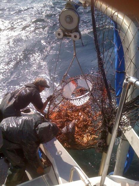 Alaska fisheries and communities at risk from ocean acidification | Sustain Our Earth | Scoop.it