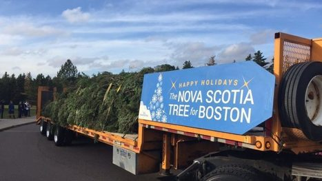 Live blog: Follow Boston's 2016 Christmas tree on its 700-mile journey from Nova Scotia   Nova Scotia is Awesome!   Scoop.it
