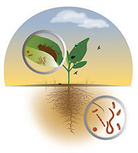 Phytobiomes 2015: Designing a New Paradigm for Crop Improvement​​​​​​​​​​​​​​​​​​​​​​, June 30–J​uly 2, 2015, Washington, DC, U.S.A.​ | Genetics of agriculturally significant micro organisms. | Scoop.it