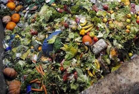 Presque la moitié de la nourriture mondiale est gaspillée | CDI de Touscayrats | Scoop.it