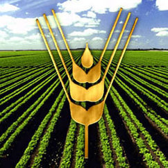 Reconoce FAO capacidad de Cuba para incrementar producción de ... - Radio Cadena Agramonte | Cultivos Hidropónicos | Scoop.it