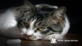 Santé animale : les Français et leurs chiens et chats, quelle évolution depuis 30 ans ? | news assurances | CaniCatNews-actualité | Scoop.it