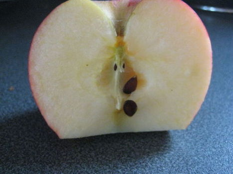 Growing Apple trees from seed. | Seeds and Their Growing Importance | Scoop.it