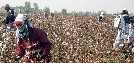 adidas, Woolworths Among Brands Saying YESS to Slavery-Free Cotton | Sustainable Brands | Business, Sustainability and Development | Scoop.it
