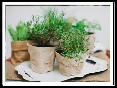 Give your Interior a beautiful look with garden pots and planters by John Steffen | Traffic Safety India | Scoop.it
