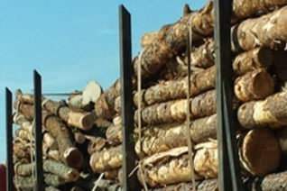 Forest2Market Launches Wood Fiber Supply Chain Optimization System - Supply Chain Market (press release) | Ecommerce logistics and start-ups | Scoop.it