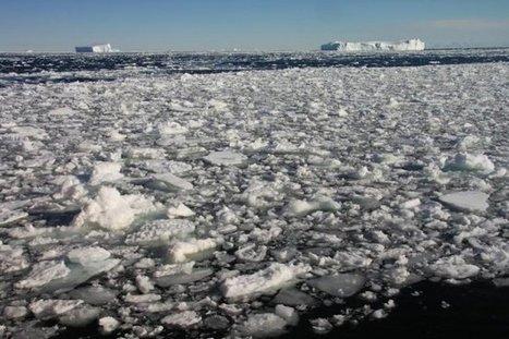 La acidificación de los océanos daña a los invertebrados marinos, según un estudio | EFEcyt | Scoop.it