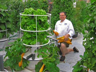 Aeroponic Home Growing Kit | Sharing Is Caring | Scoop.it