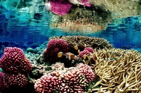 Climate Change May Reduce Coral Reefs' Ability To Protect Coasts - University Herald | Coral reef ecosystems resilience | Scoop.it