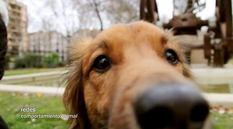 Redes para la Ciencia » Redes 144: El bienestar animal importa | VeggieLife&Sport | Scoop.it