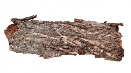 German scientists create usable foam from tree bark | Five Regions of the Future | Scoop.it