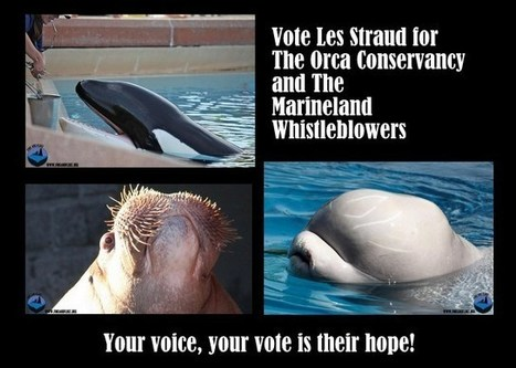 Join The Ric O'Barry Dolphin Project Give your Vote to Les Stroud and the Orca Conservancy | Dolphins | Scoop.it