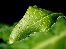 Le biomimétisme : ce que la Nature nous apprend | Les matériaux intelligents & le Biomimétisme | Scoop.it