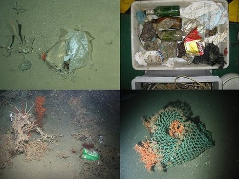 Litter now everywhere in the ocean | Sustain Our Earth | Scoop.it
