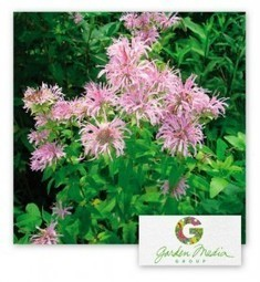 Garden Media Group : Garden Trends for 2013 | Garden Trends | Scoop.it