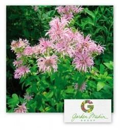 Garden Media Group : Garden Trends for 2013 | Garden Trends | Scoop.it