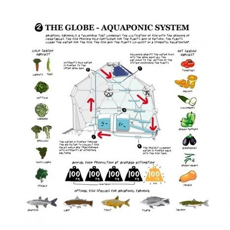 Rooftop Fish: The Future of Urban Farming? | Urban Farming | Cultivos Hidropónicos | Scoop.it