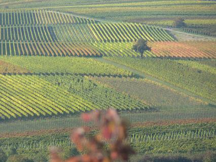 Weinrallye #52: Klimawandel und Weinanbau | Bottles in a Box | Weinrallye | Scoop.it