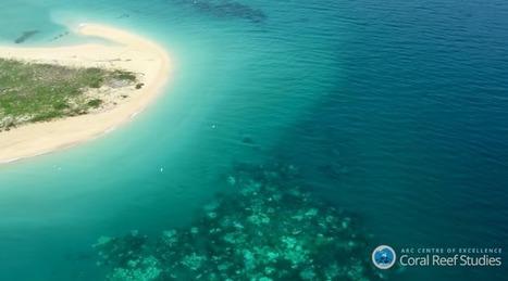 Record-Breaking Hot Ocean Temperatures Are Frying The Great Barrier Reef | GarryRogers Biosphere News | Scoop.it