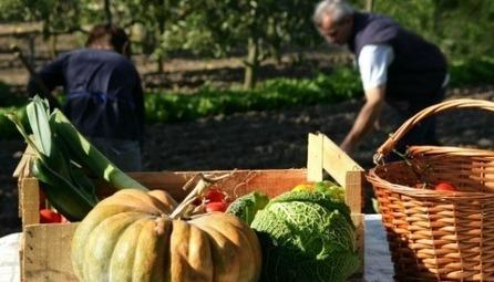 Pourquoi manger local et de saison ? | ECONOMIES LOCALES VIVANTES | Scoop.it