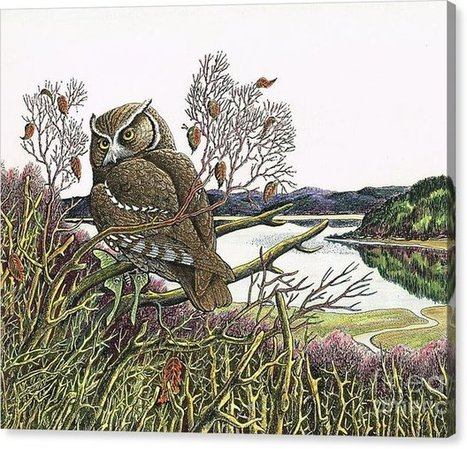 Limited Time Promotion: Saw Whet At Oak Bay Stretched Canvas Print | The Nature of Art | Scoop.it