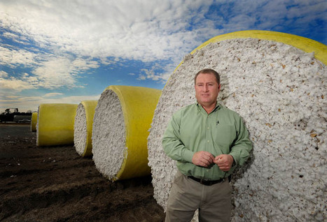 Cotton farmers produce more but profit less | North Carolina Agriculture | Scoop.it