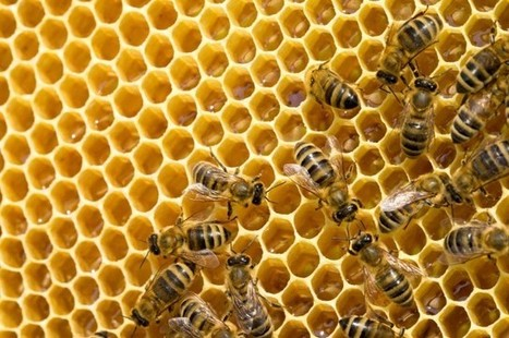 Watch This Fascinating Time-Lapse Of Hatching Bees | Beekeeping | Scoop.it