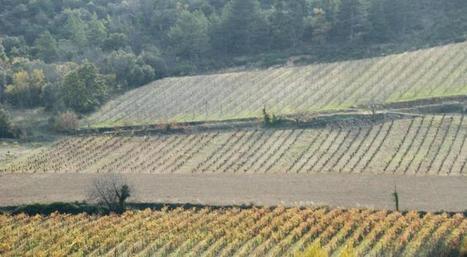 05/04/13 - Perspectives d'évolution de la filière vitivinicole dans la région Languedoc-Roussillon à l'horizon 2025 - Analyse n° 55 | Vinideal - A la recherche de votre Vin Idéal ! www.vinideal.com | Scoop.it