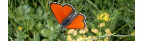 [Télécharger] Articles > Papillons | Insect Archive | Scoop.it