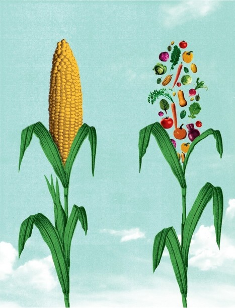 Unearthed: A rallying cry for a crop program that could change everything | Real Food Rebellion | Scoop.it