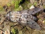 La UCM crea un banco de sonidos de insectos y otros animales | Bichos en Clase | Scoop.it