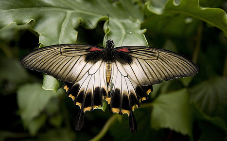 Quick Tip: How to Photograph Insects & Butterflies | Everything Photographic | Scoop.it